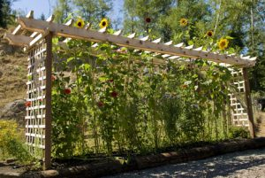 trellis fencing panels in action